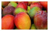 Specializing in Jackfruit, Mangoes, Avocadoes, Bananas and smaller quanitites of Exotic Fruits